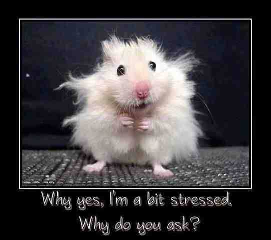 Fail Pictures – Stressed Mouse?