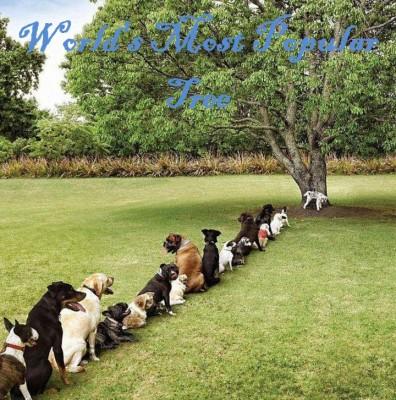 Popular Tree?