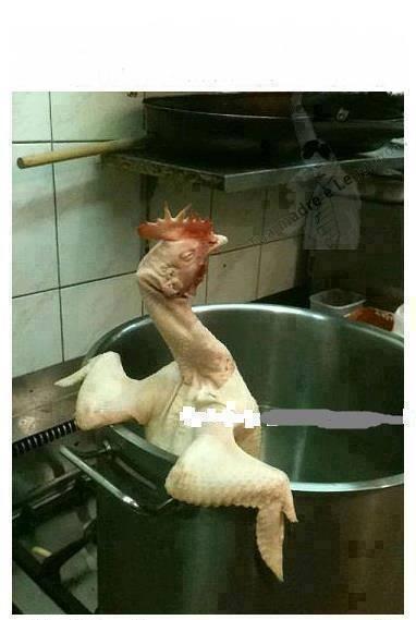 Chicken getting ready for a bath?