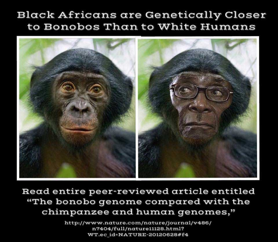 Genetically closer to Bonobos