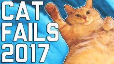 Hilarious Cat Fails (April 2017)