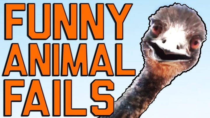 Funny Animal Fails: Just In Time For Election 2016 || Fail Army